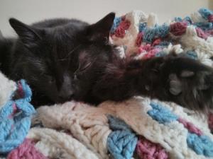 Pants the cat, asleep